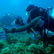 An Underwater Salute to Grandma Vera