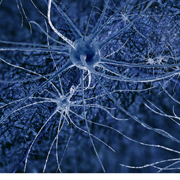 TAU links growth factor to development of Alzheimer's disease