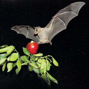 New Bat Laboratory to Help Decipher Human Neurology