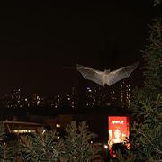 Tel Aviv Bats Have More Fun Photo: S. Greif