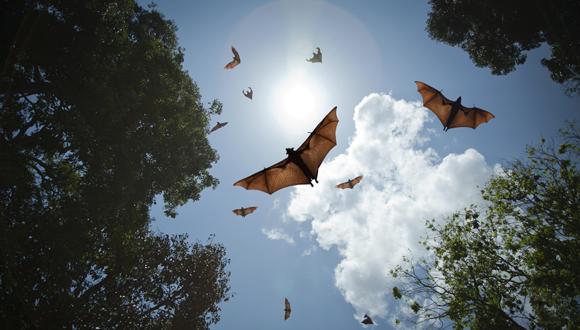 What do bats talk about? A TAU study explains