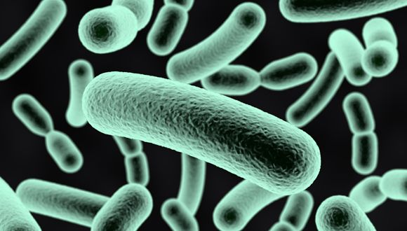Using 'Good' Bacteria to Fight 'Bad' Bacteria