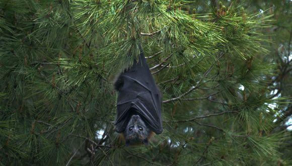 Bats 'Social Distance' Too
