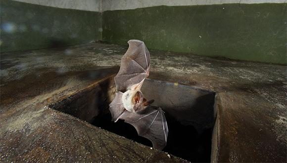 How do bats find their way? (Photo: Jans Raidel)
