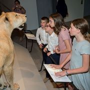 Steinhardt Museum inaugurated with flare and critters