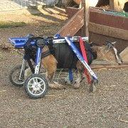 Protecting Animal Welfare