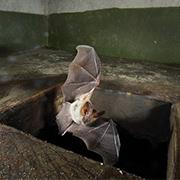 "Robotic ""bat"" uses sound to map unique environments"
