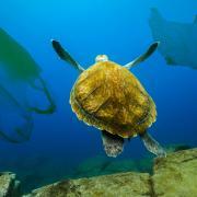 No more plastic in the ocean?