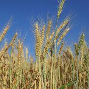 Expert Analysis: Ensuring the World's Food Supply